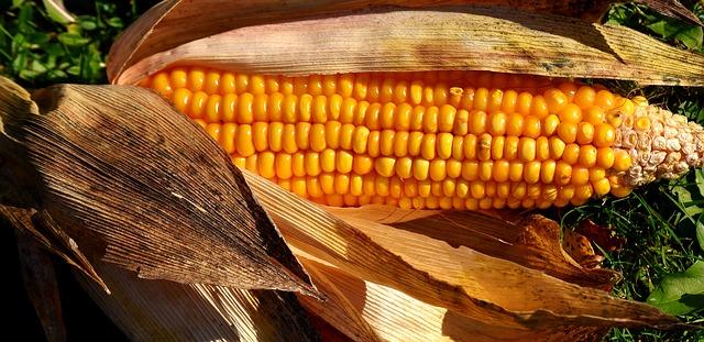 Какие витамины содержатся в кукурузе